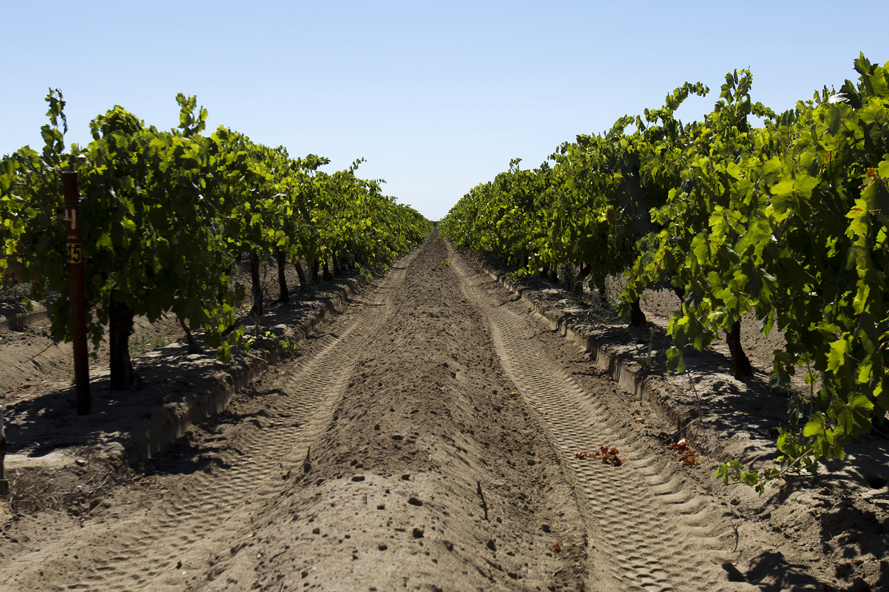 Madera, an agricultural town outside of Fresno, is lined with vineyards and nut tree groves. The town's population is 78 percent Latino. (Alejandra Armstrong/News21)