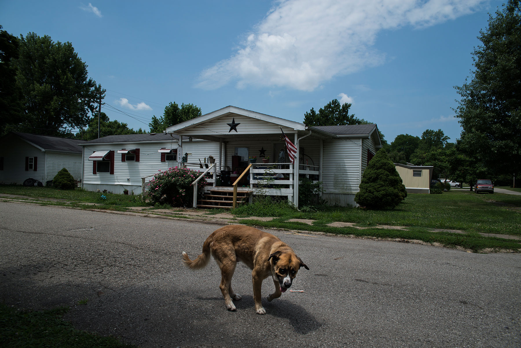 A dog plays in the streets of Newport, Indiana, located in Vermillion County. Indiana has the highest voter removal rate in comparison with other states, and Vermillion County has a higher removal rate than any other county in Indiana. (Roman Knertser/News21)