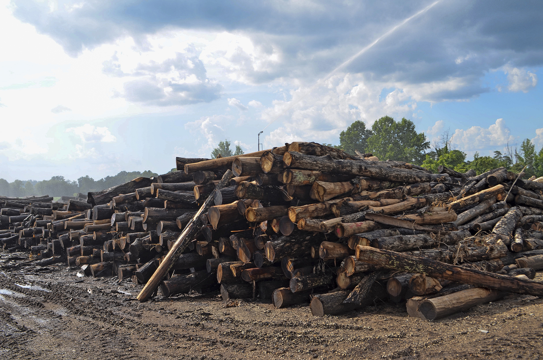 Water sprinkles piles of logs at Honest Abe Log Homes in Clay County, Tennessee. The family-owned business used to employ about 500 but now employs 130. (Lian Bunny/News21)